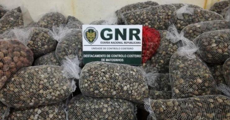 Resultado de imagem para GNR apreende em Viana mais de duas toneladas de amêijoa no valor de 21 mil euros